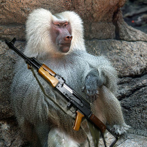 The Armed Ape